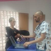 badanie kardiologiczne psa   KreVetki