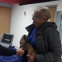 mały pies na badaniu serca   KreVetki