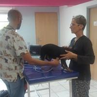 pies na badaniu kardiologicznym   KreVetki