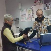 psie badanie serca   KreVetki