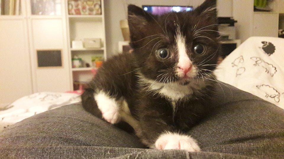 kot na łóżku   KreVetki