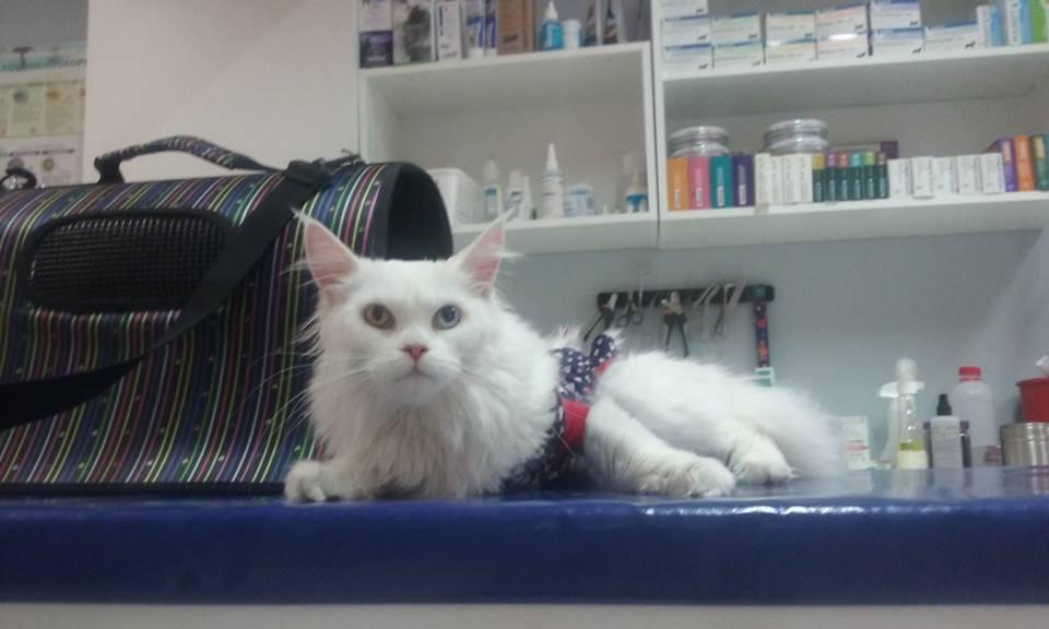 biały kot   KreVetki