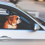 wyjazd z psem za granice